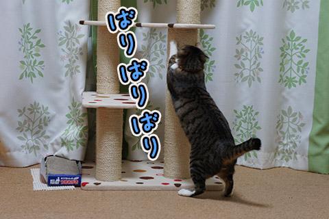 爪とぎするネコ2