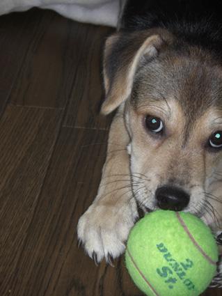 トナとテニスボール