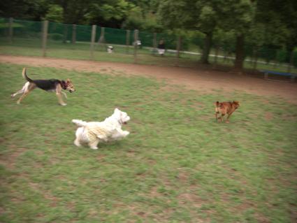 小型犬に負ける