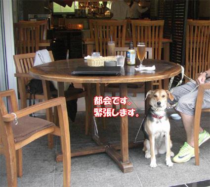 都会ドッグカフェ