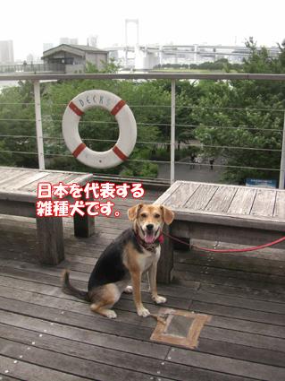 日本代表犬