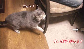 猫からシャー