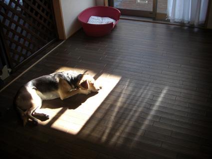 日向で昼寝