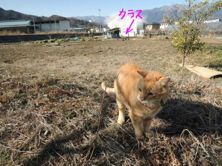 snap_tonekori6_20132513223.jpg