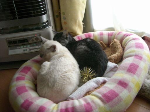 fluffy&miu 5