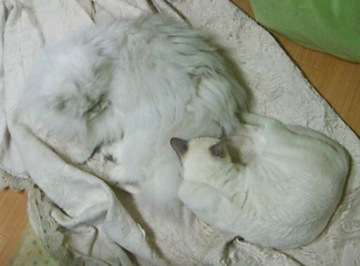 yutaka&miu 4