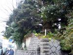 24益田家モチの木