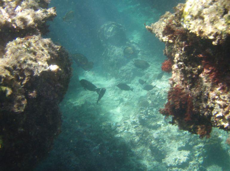 シュノーケリングの醍醐味、いきなり深くなる海。