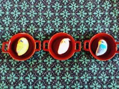 羊毛インコ3種