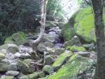 でもこんな感じで苔が生えた石が一杯。景色はなんかいい