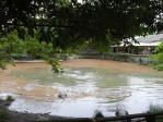真ん中の池のワニは