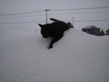 我が物と思えば軽しみのの雪
