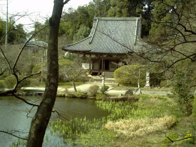 rich plum-本堂と池