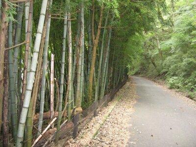 rich plum-竹