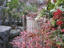 rich plum-お庭