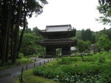 rich plum-林泉寺