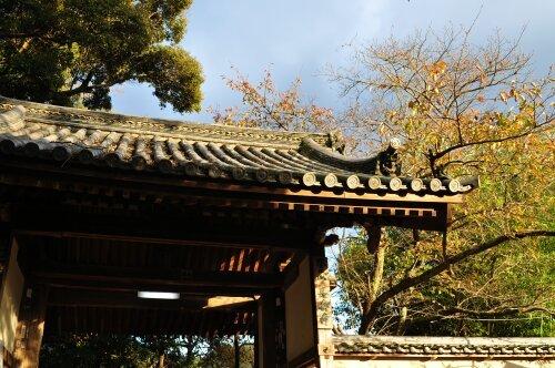 rich plum-長岳寺