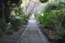 rich plum-奥への道