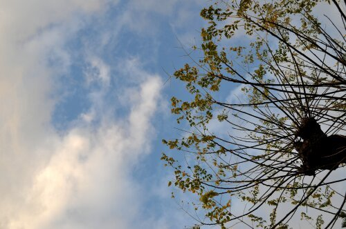 rich plum-空と木