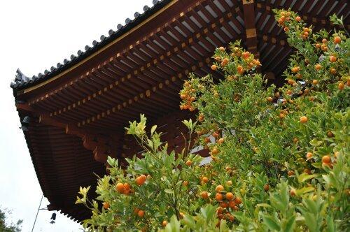 rich plum-南円堂
