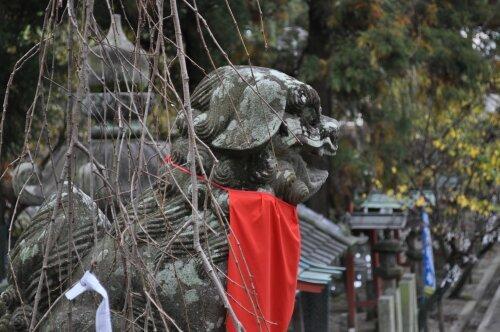 rich plum-氷川神社の狛犬