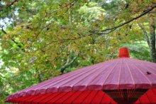 rich plum-傘
