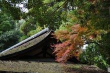 rich plum-屋根と木