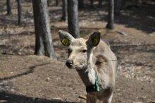 rich plum-鹿