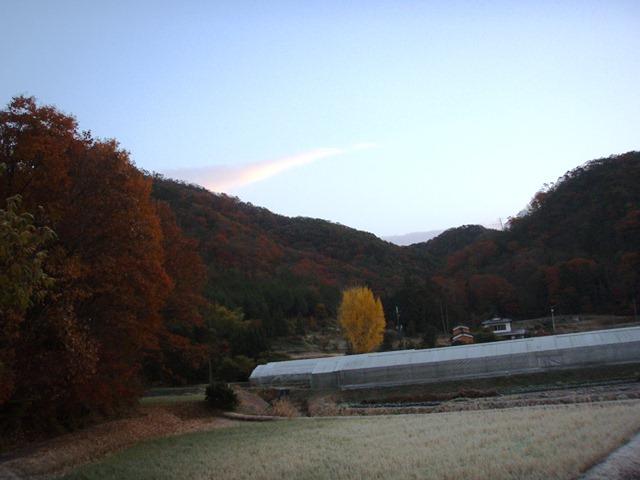 今朝は快晴で良く冷え込みました。温度計は氷点下です。我が家の裏の方角に見える大イチョウ、かなりの大木です。このイチョウが落葉すると冬が来たと実感します。