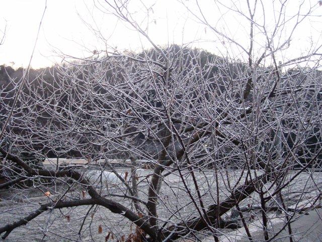霜の樹氷110108