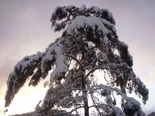ユ-カリに雪110215