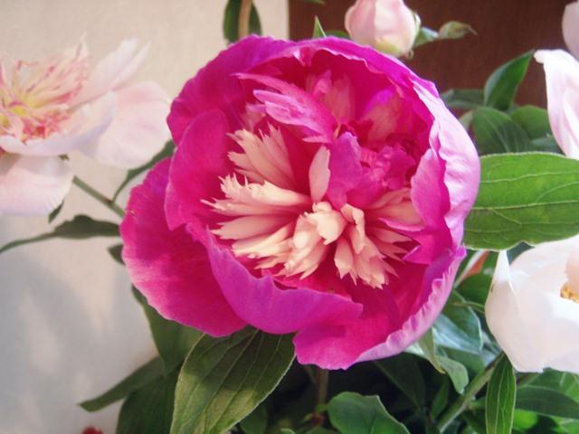 花瓶の花110529