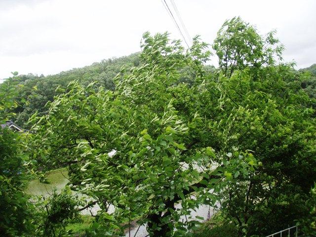 風の庭台風110530