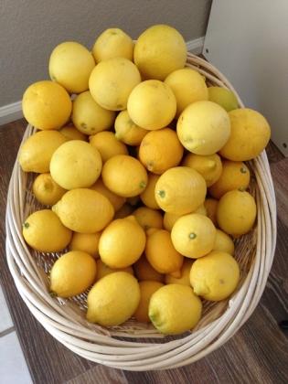 2013_lemon1.jpg