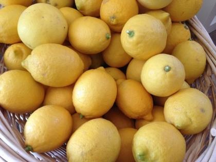 2013_lemon2.jpg