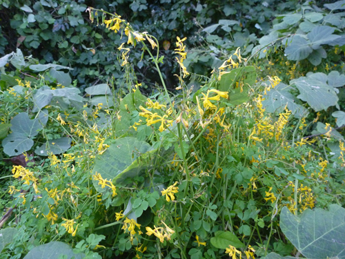 秋の野草2