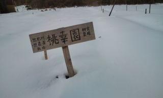 積雪10cm