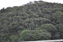 沖縄・高江 ブロッコリーの森