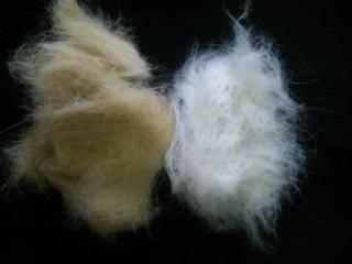 綿毛....