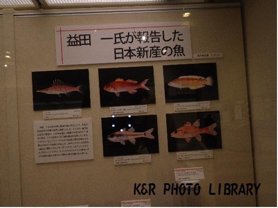 益田先生が報告した日本新産の魚