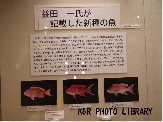 益田先生が記載した新種の魚