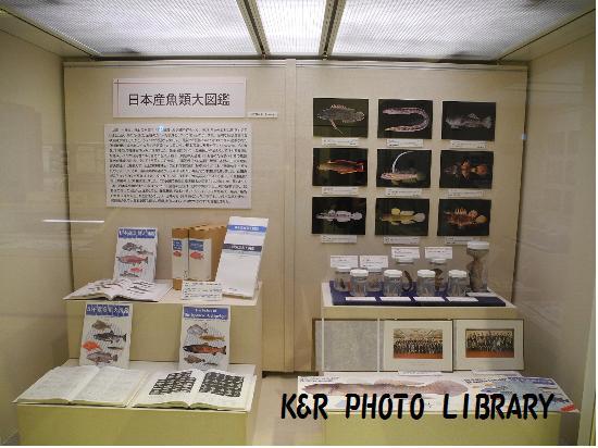 日本産魚類大図鑑