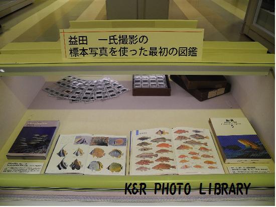 益田先生の標本写真を使った最初の図鑑