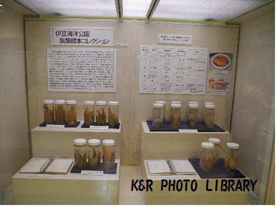 魚類標本コレクション