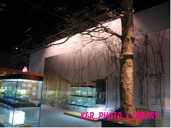 神奈川の植物