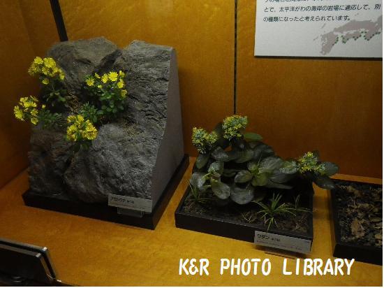 神奈川の固有生物1