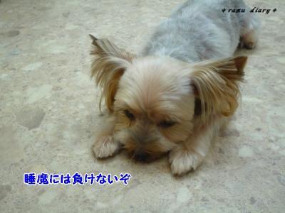 0919mametarou2