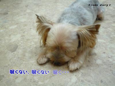 0919mametarou3