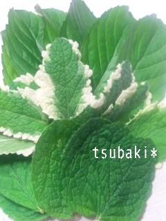 moblog_40852b7d.jpg