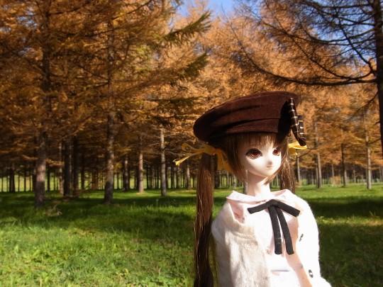 コガネの森02